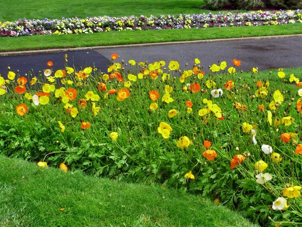 Botanic-Gardens-1.jpeg