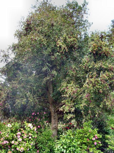 Botanic-Gardens-12.jpeg