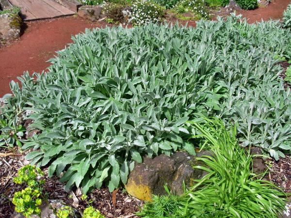 Botanic-Gardens-14.jpeg
