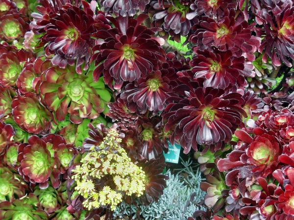 Botanic-Gardens-6.jpeg