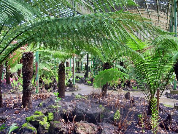 Botanic-Gardens-8.jpeg