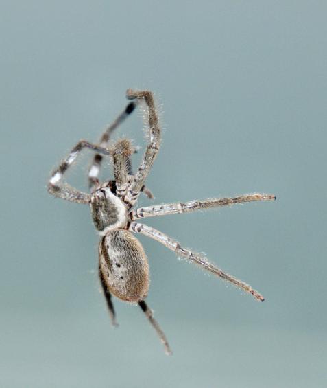Spider-13.jpeg