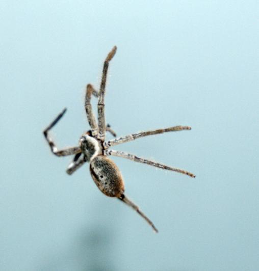 Spider-14.jpeg