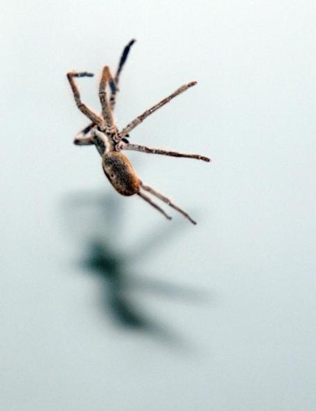Spider-15.jpeg