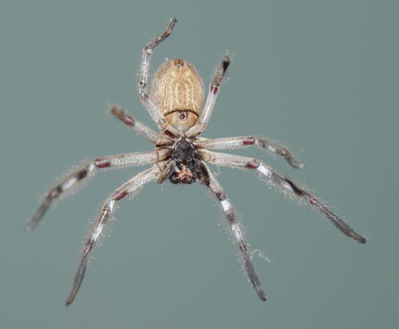 Spider-8.jpeg