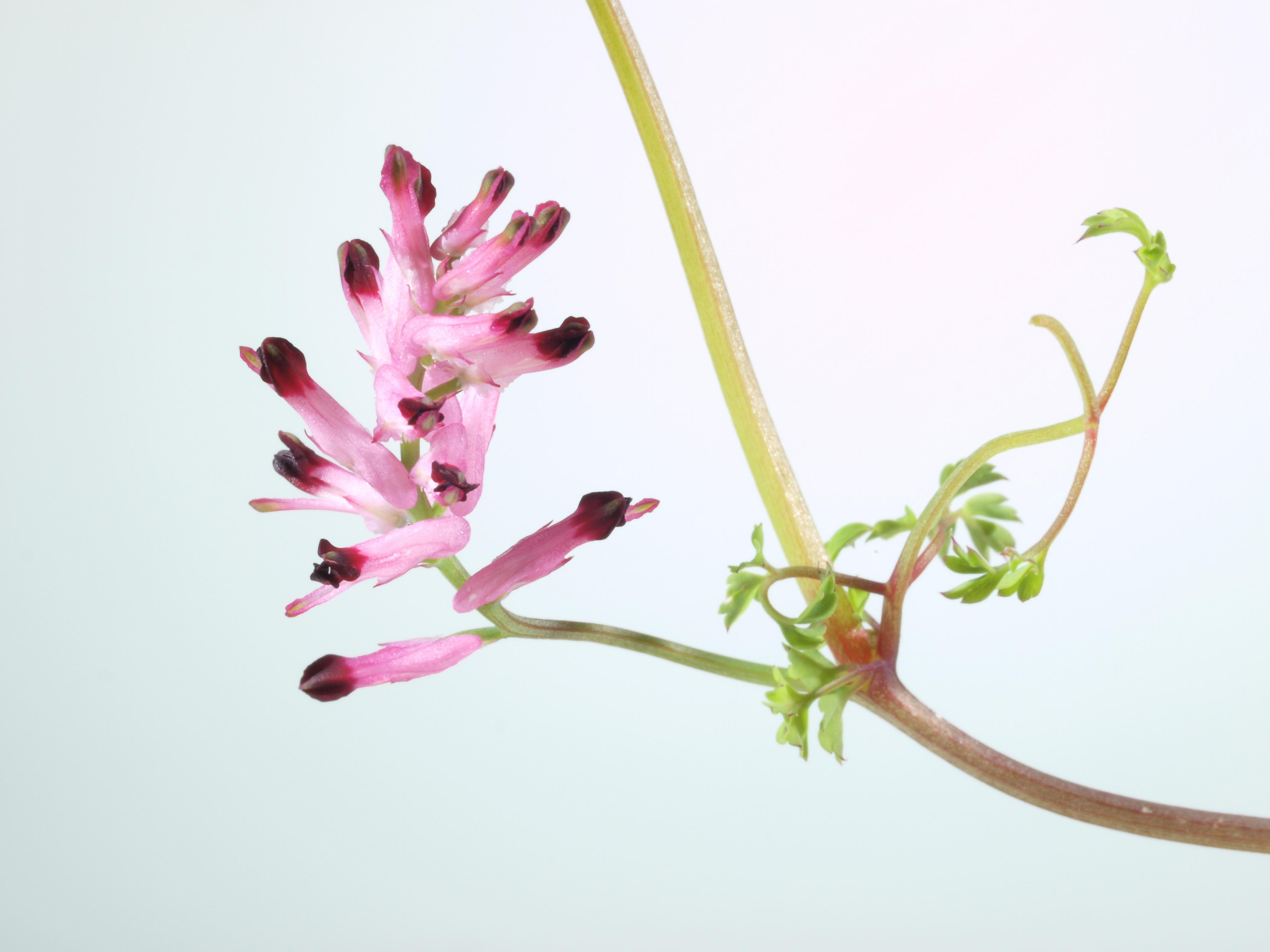 Mystery-flower-1-3.jpeg