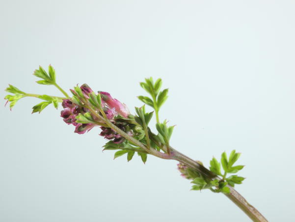 Mystery-flower-1-4.jpeg