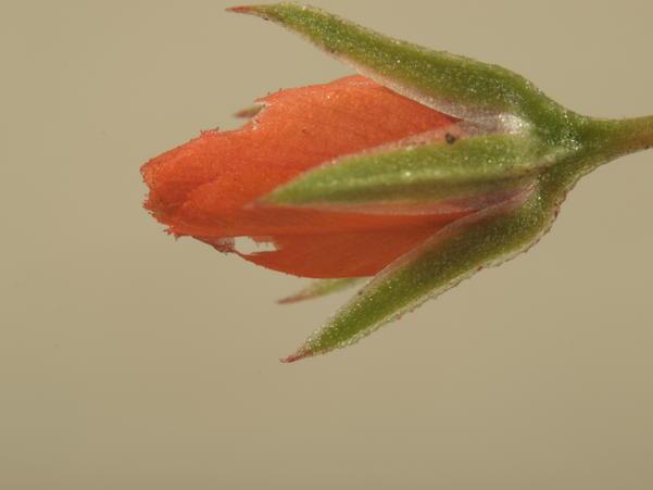 Mystery-flower-2-3.jpeg