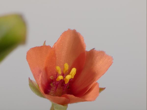 Mystery-flower-11.jpeg