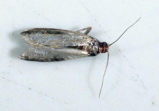 Moth-2.jpeg