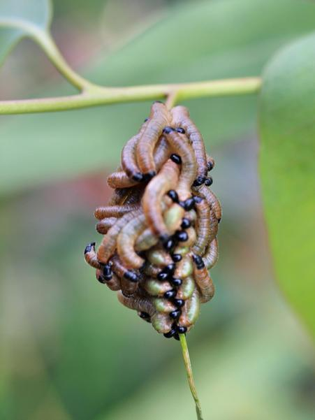 Caterpillars-5.jpeg