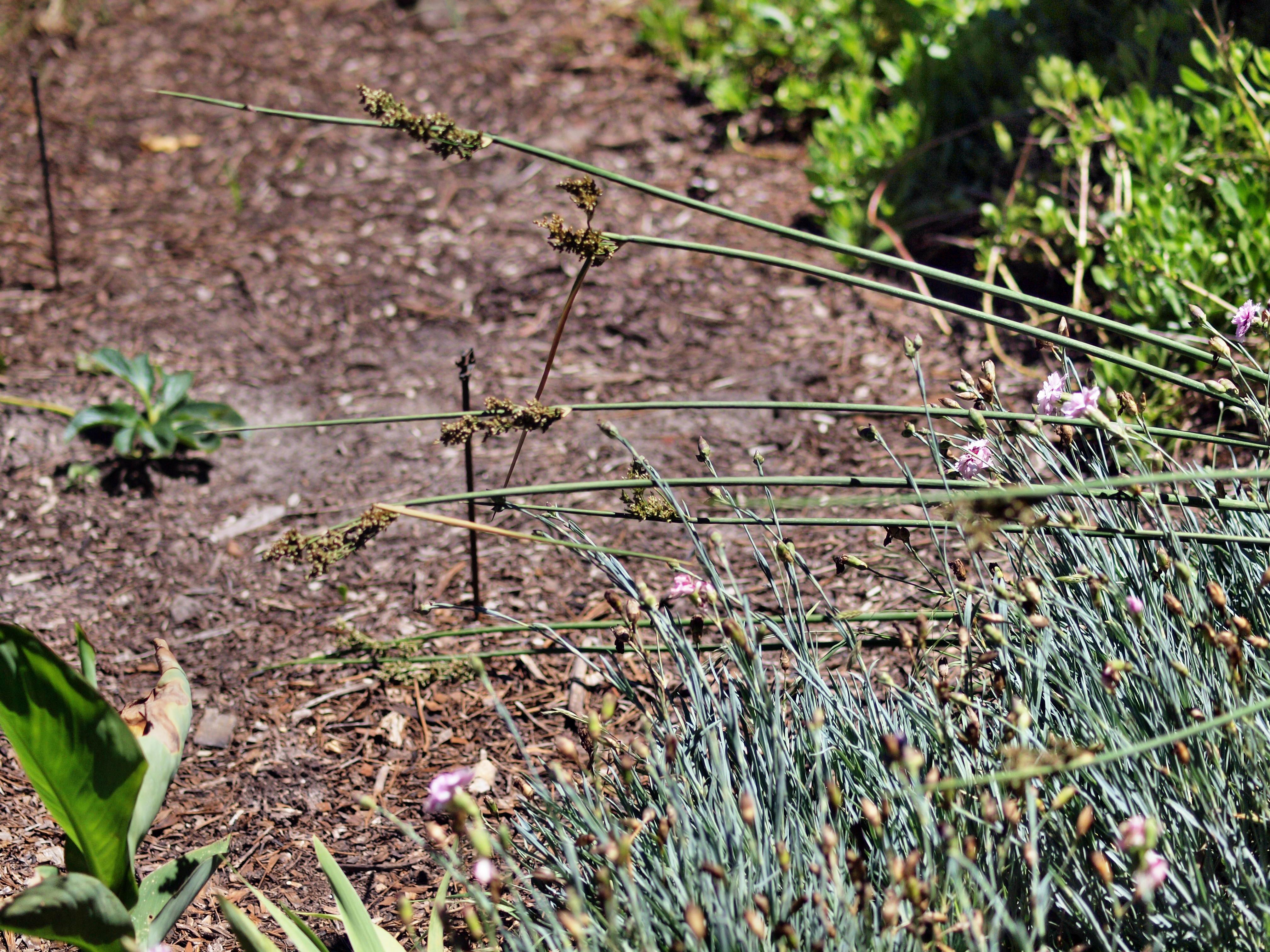 Reeds-2.jpeg