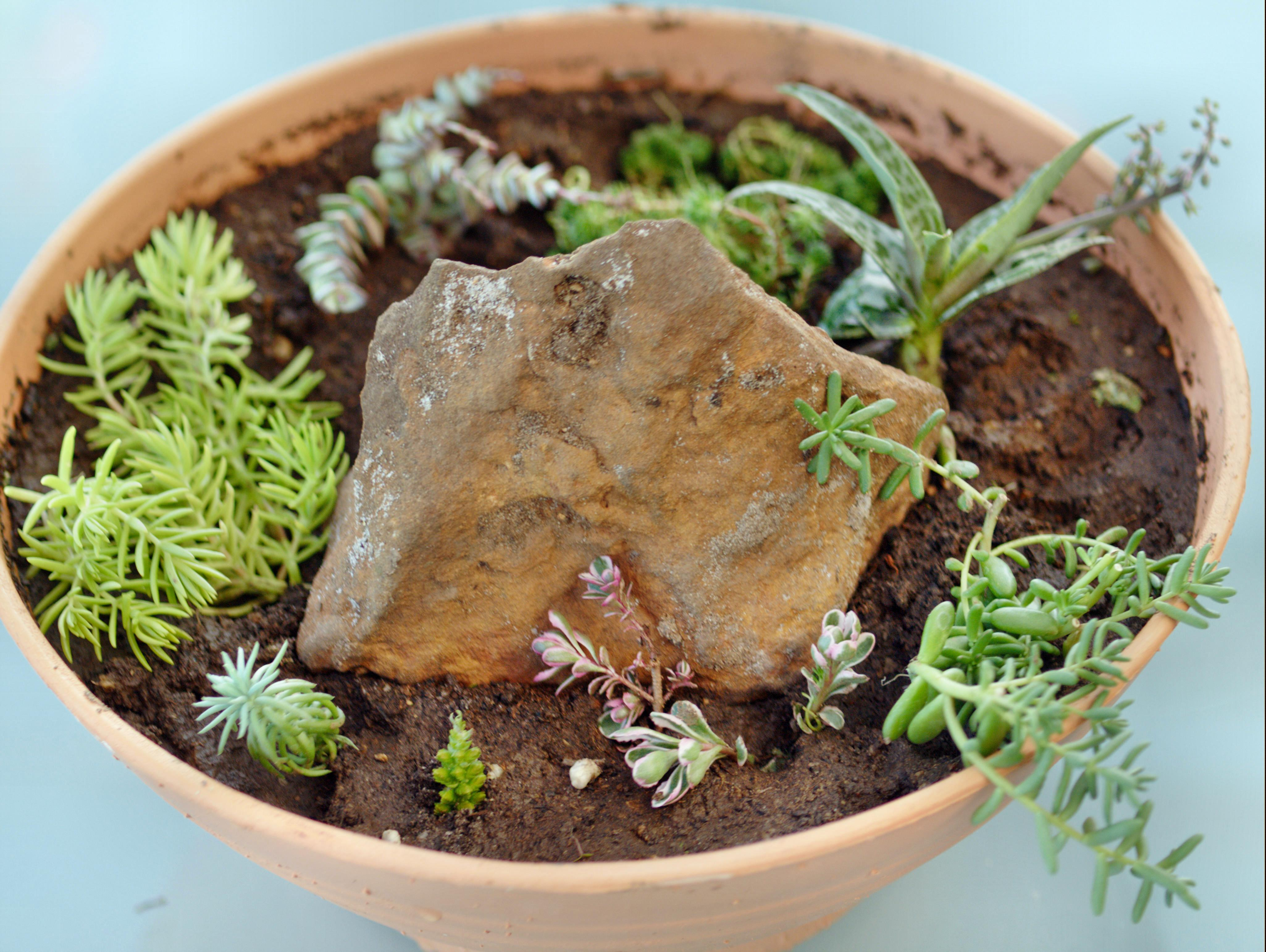 New-succulent-garden-3.jpeg