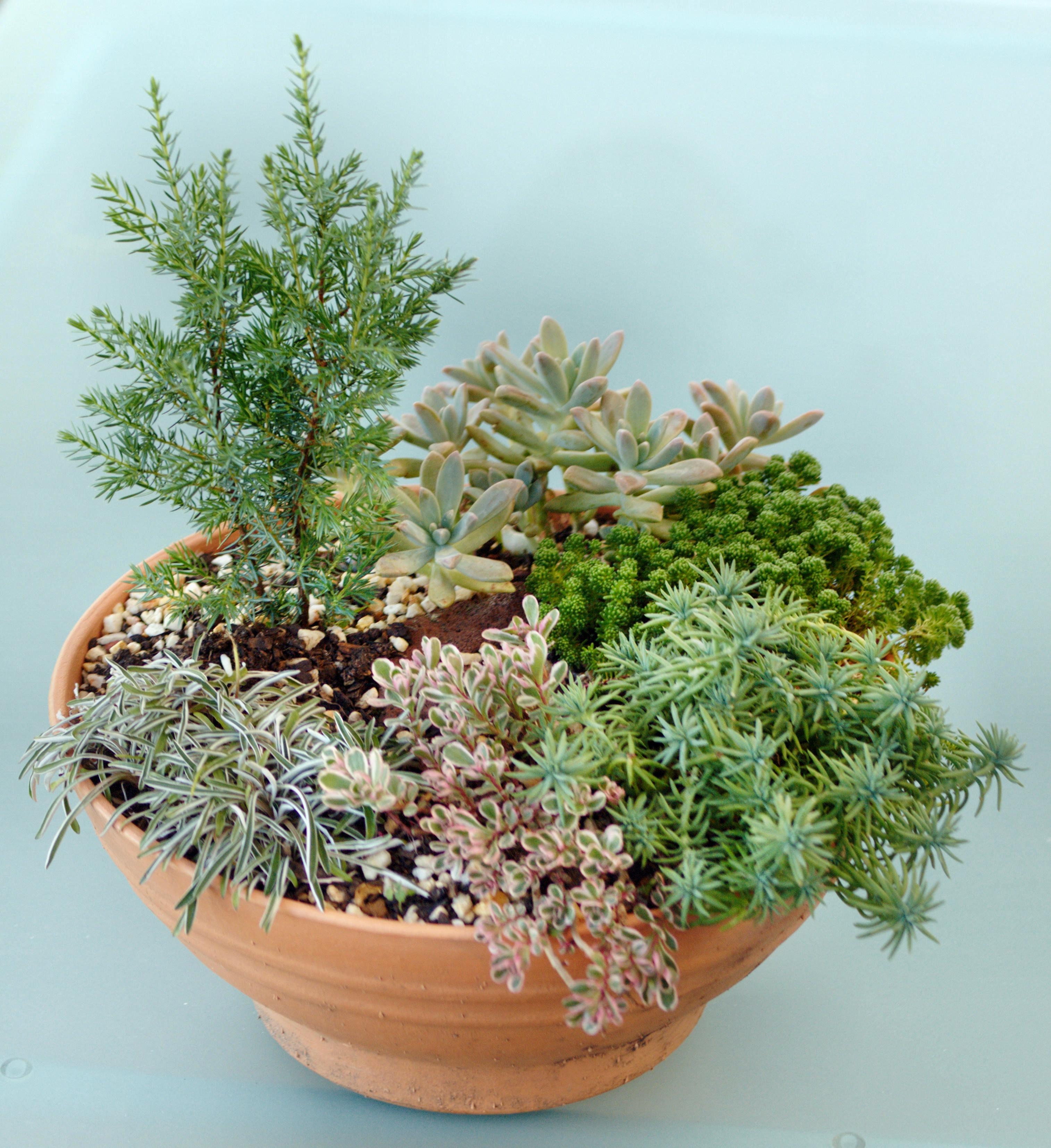 Old-succulent-garden-1.jpeg