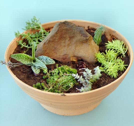 New-succulent-garden-1.jpeg