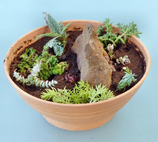 New-succulent-garden-2.jpeg
