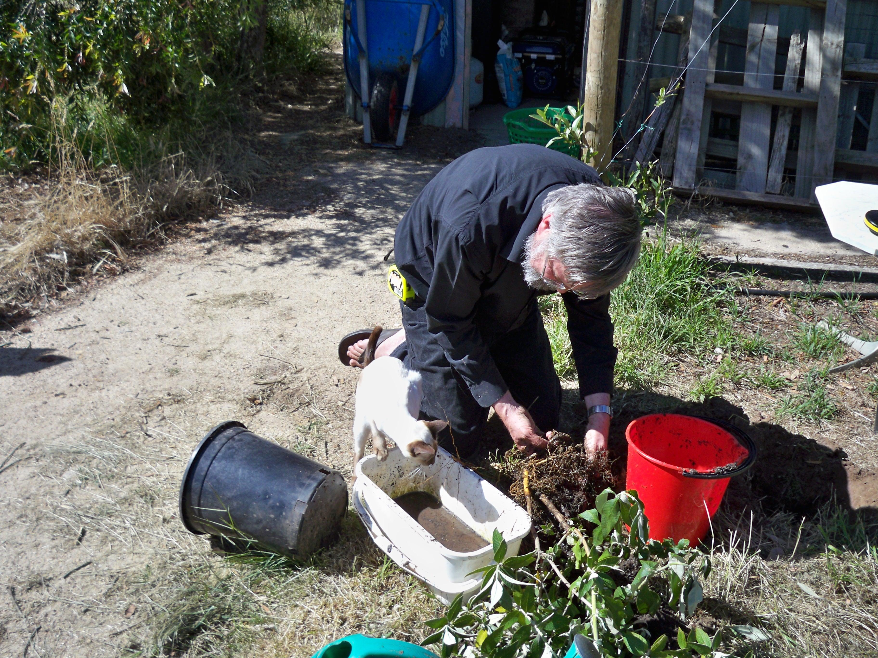 Planting-Buddlejas-17.jpeg