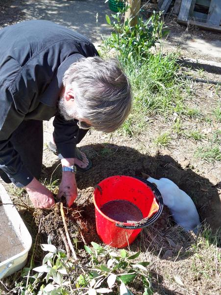 Planting-Buddlejas-10.jpeg