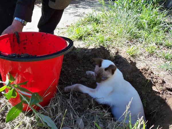 Planting-Buddlejas-12.jpeg