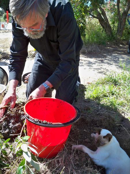Planting-Buddlejas-13.jpeg
