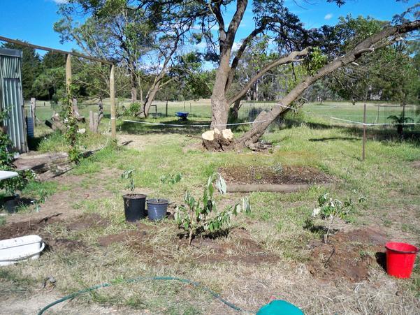 Planting-Buddlejas-27.jpeg