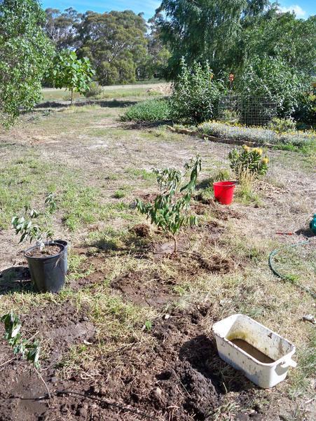 Planting-Buddlejas-29.jpeg
