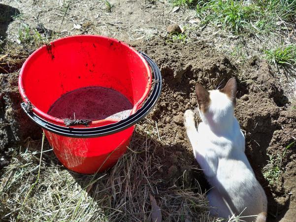 Planting-Buddlejas-4.jpeg