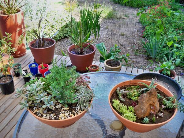 Succulent-gardens-1.jpeg