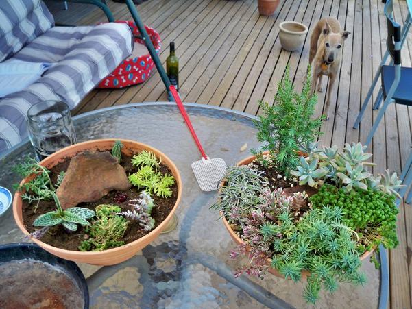 Succulent-gardens-2.jpeg