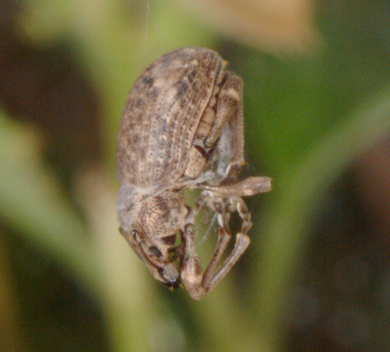 Beetle-11.jpeg