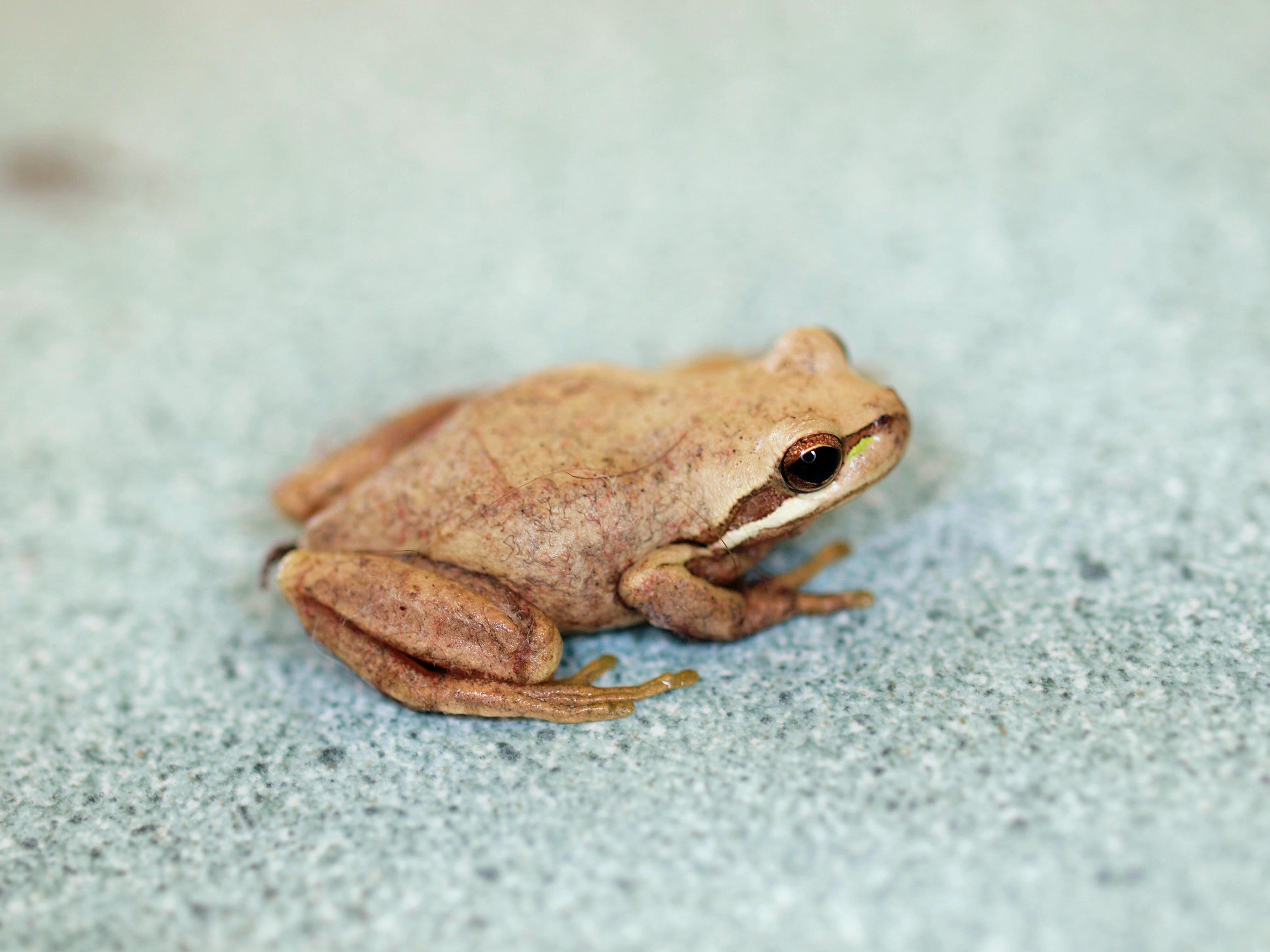 Frog-2.jpeg