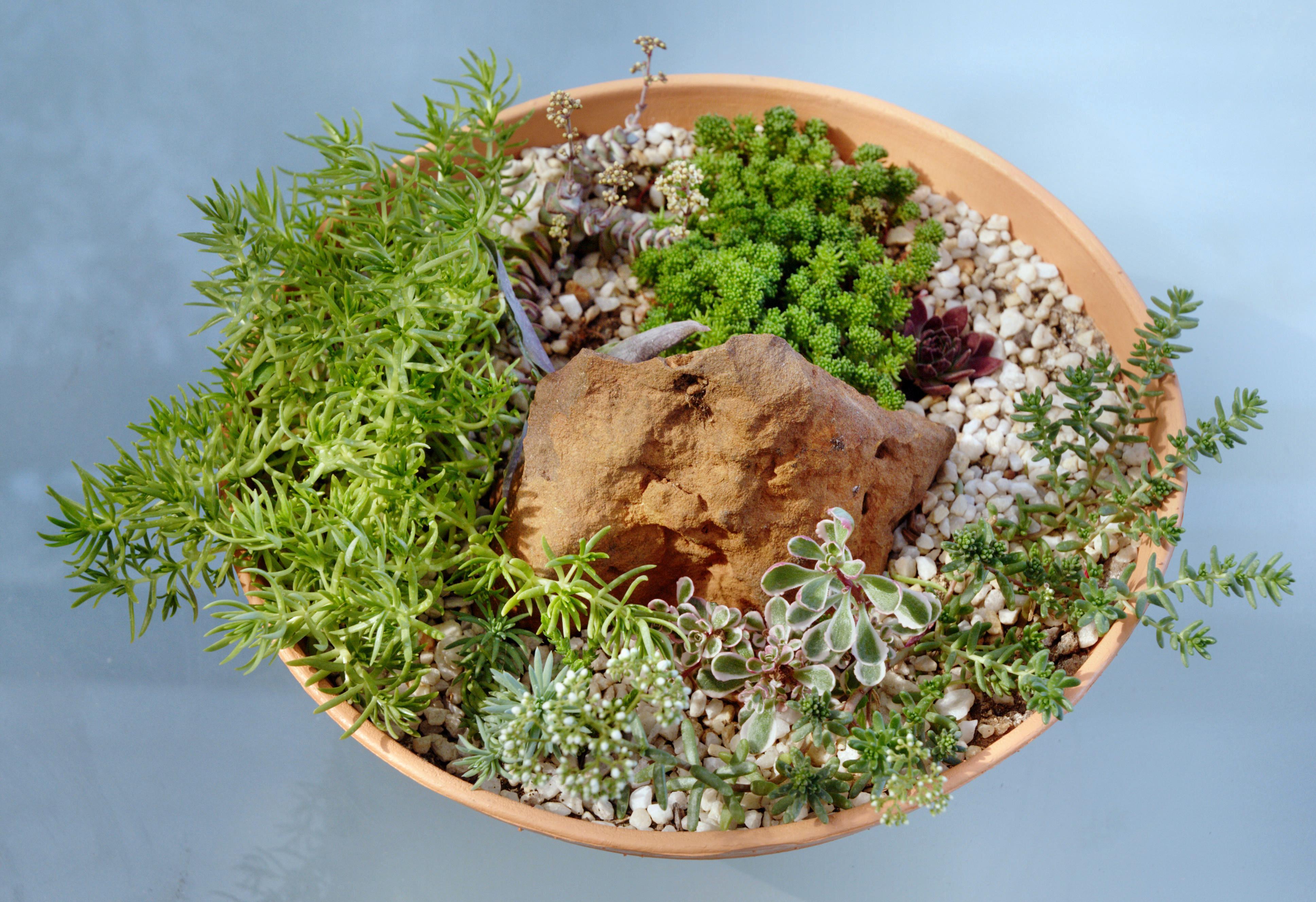 Old-succulent-garden-3.jpeg