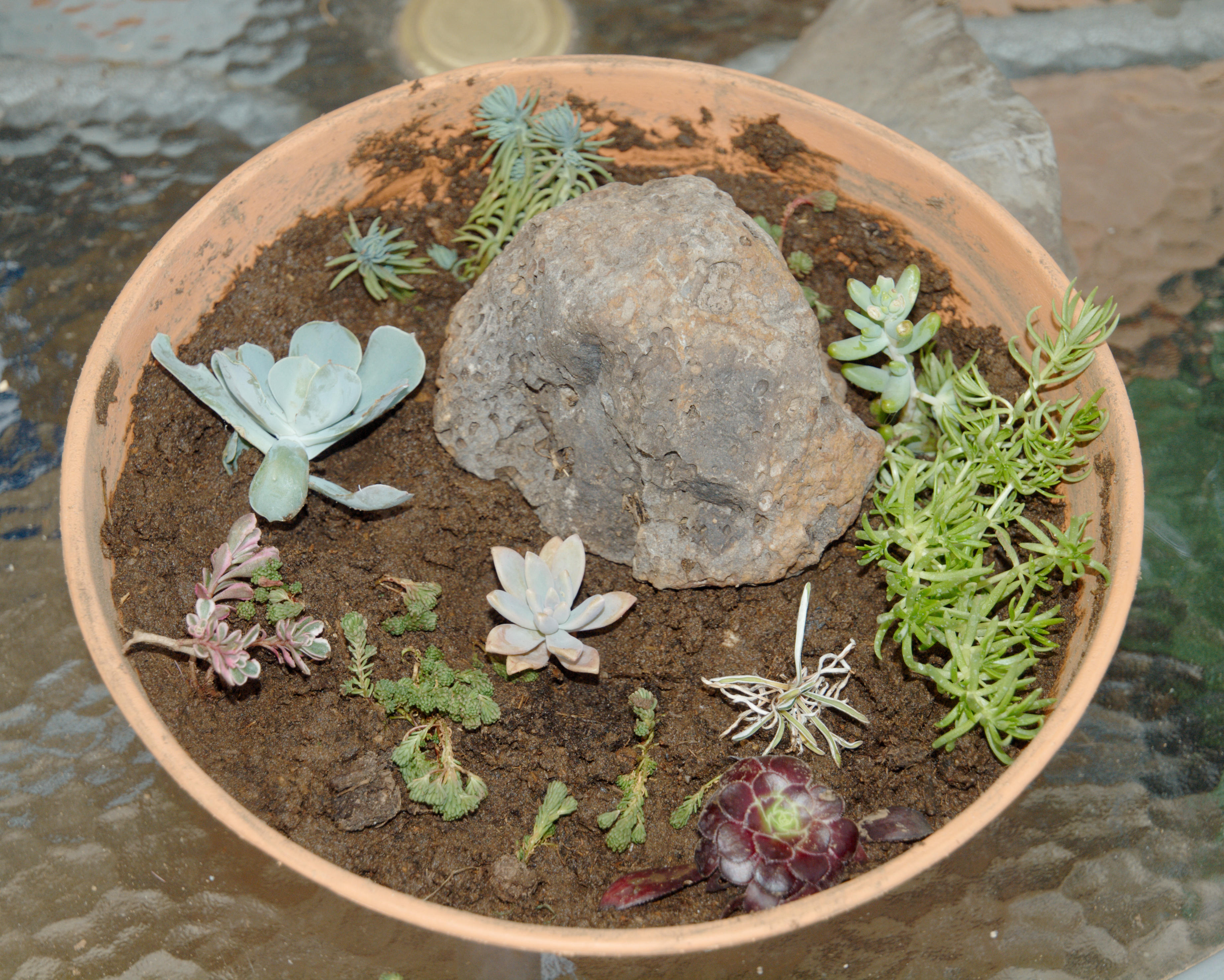 Succulent-garden-6.jpeg