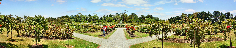 Rose-garden.jpeg
