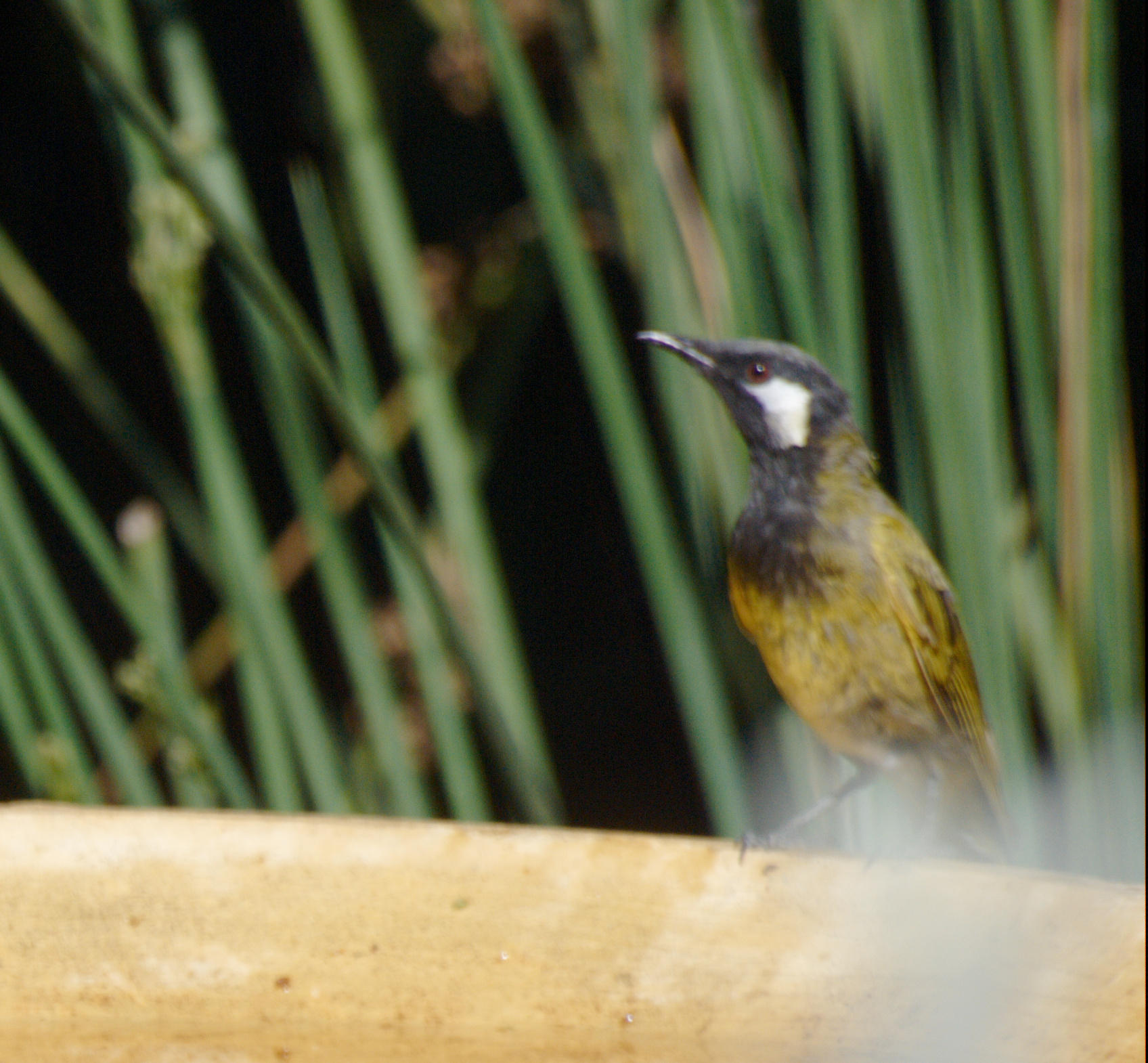 Bird-bath-6.jpeg