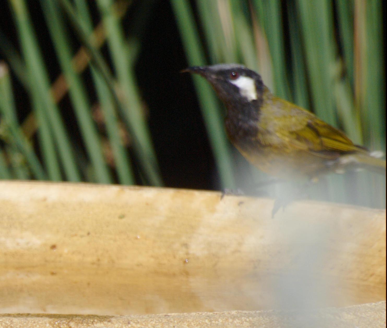 Bird-bath-7.jpeg