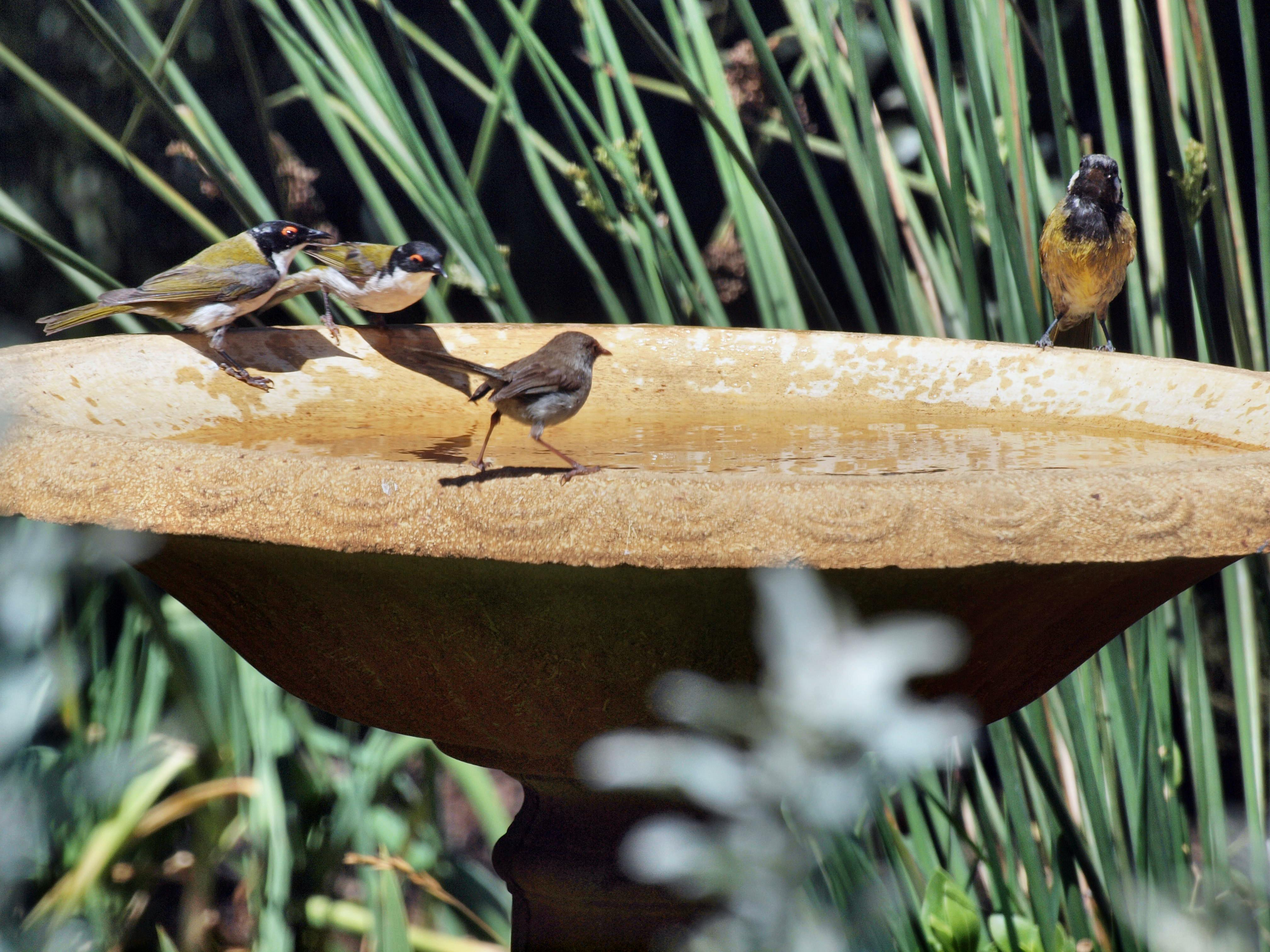 Bird-bath-11.jpeg