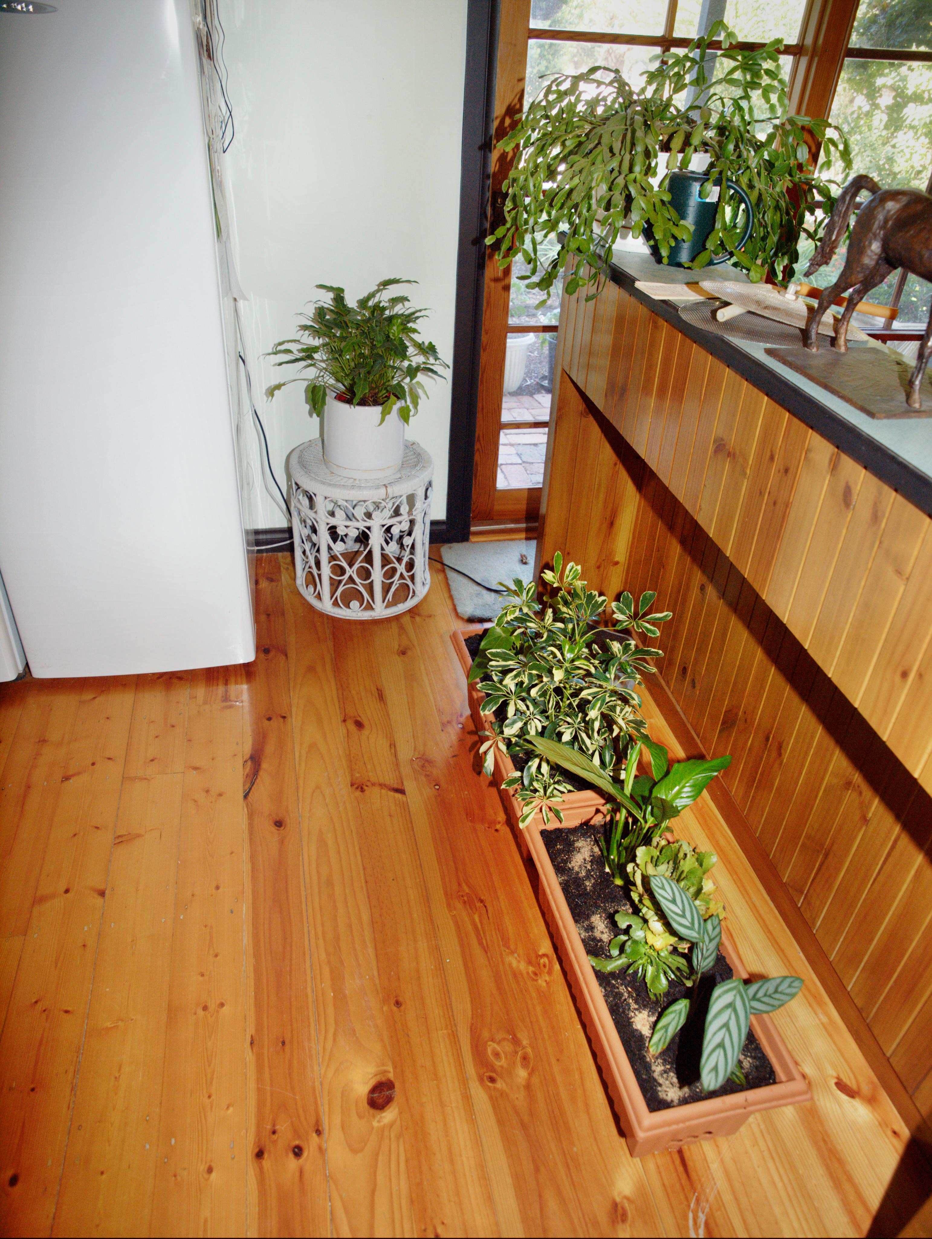 Kitchen-plants-2.jpeg