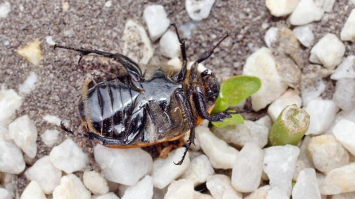 Beetle-3.jpeg