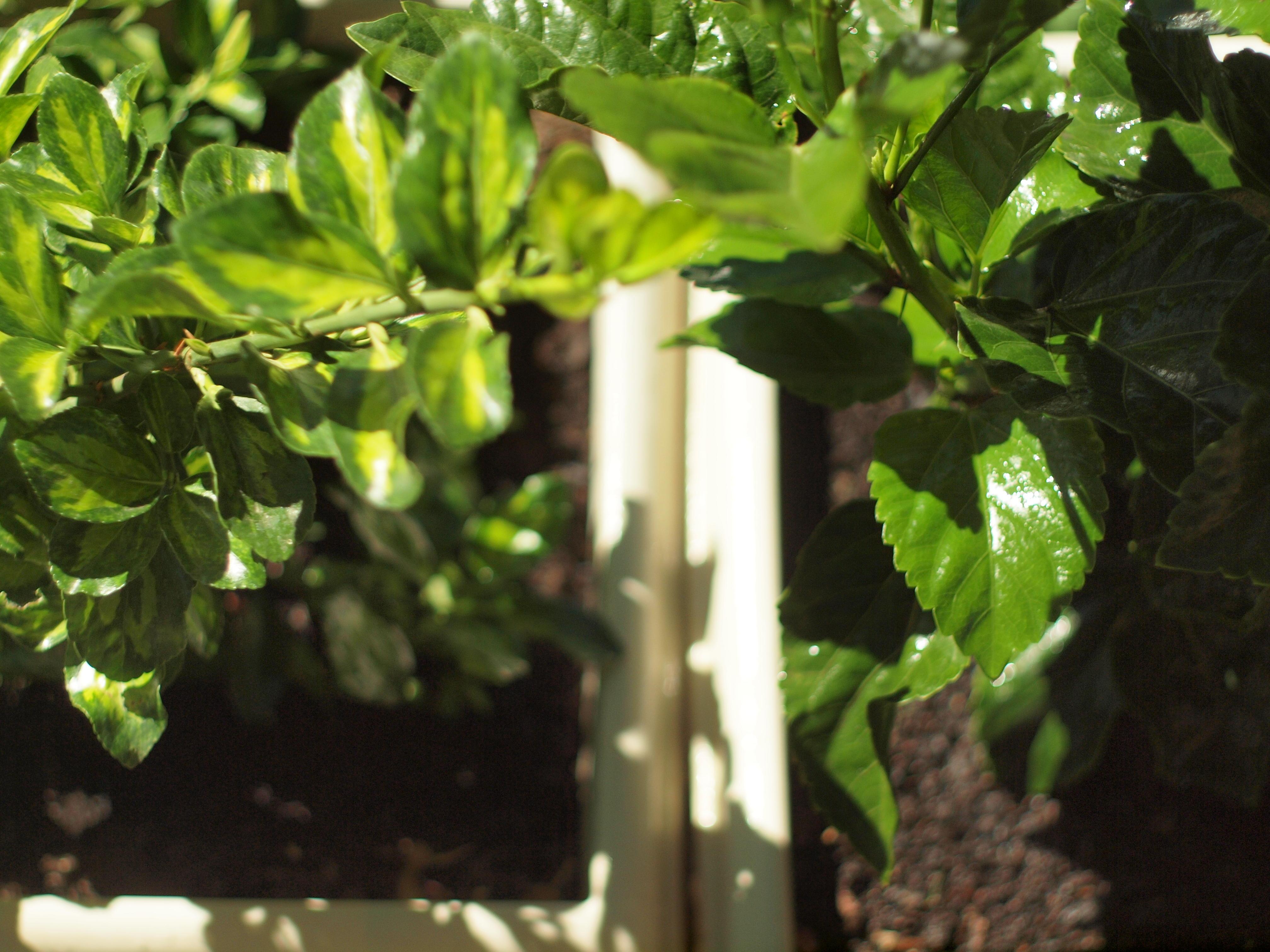 Garden-8.jpeg