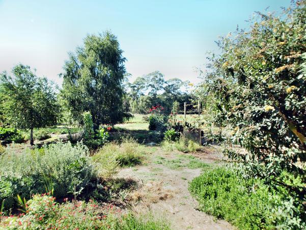 garden-e+0EV.jpeg