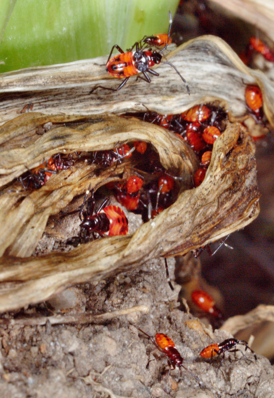 Beetles-1.jpeg