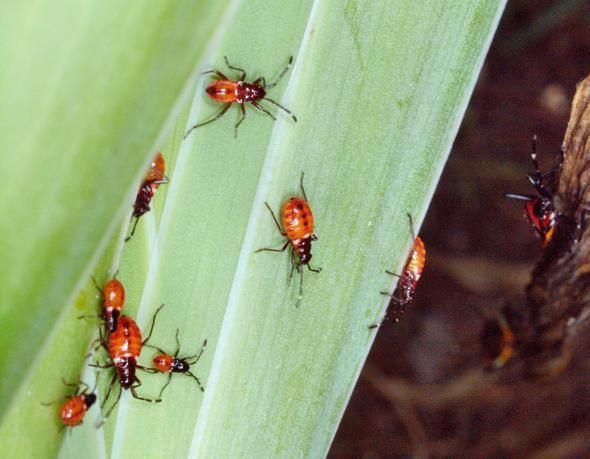 Beetles-4.jpeg