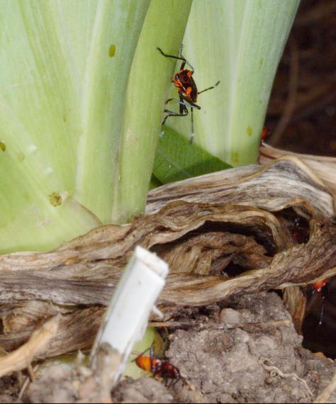 Beetles-7.jpeg