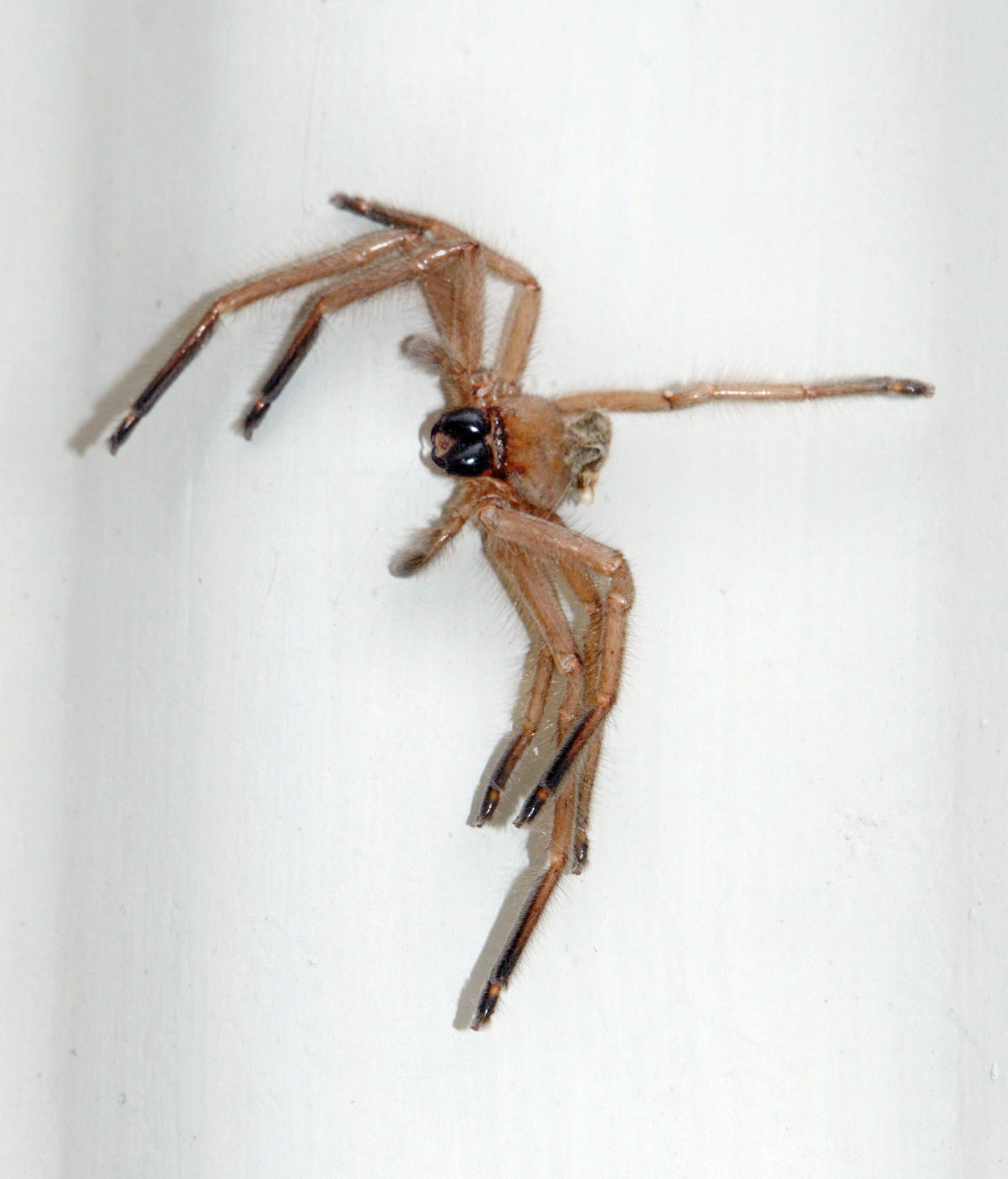 Spider.jpeg