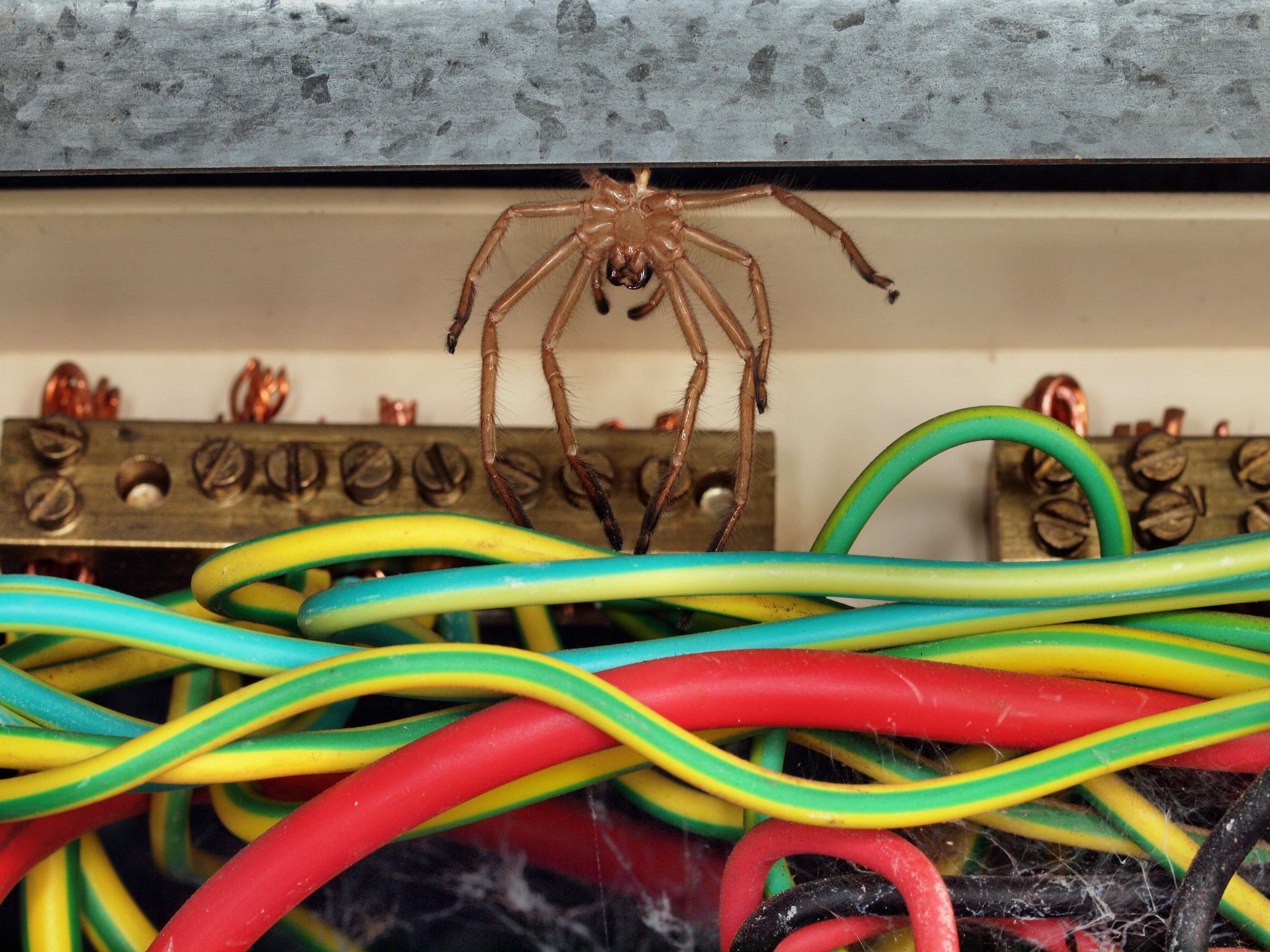 Switchboard-3.jpeg