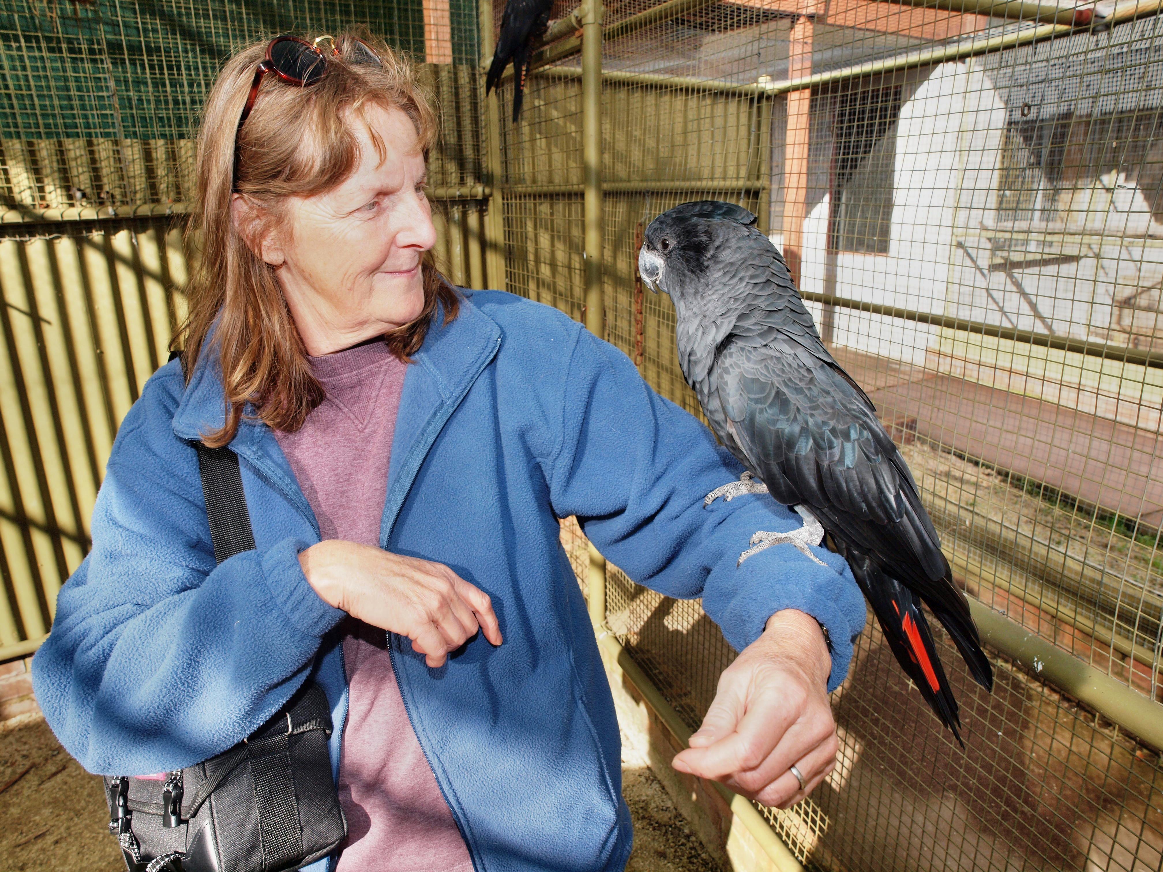 Black-cockatoo-8.jpeg