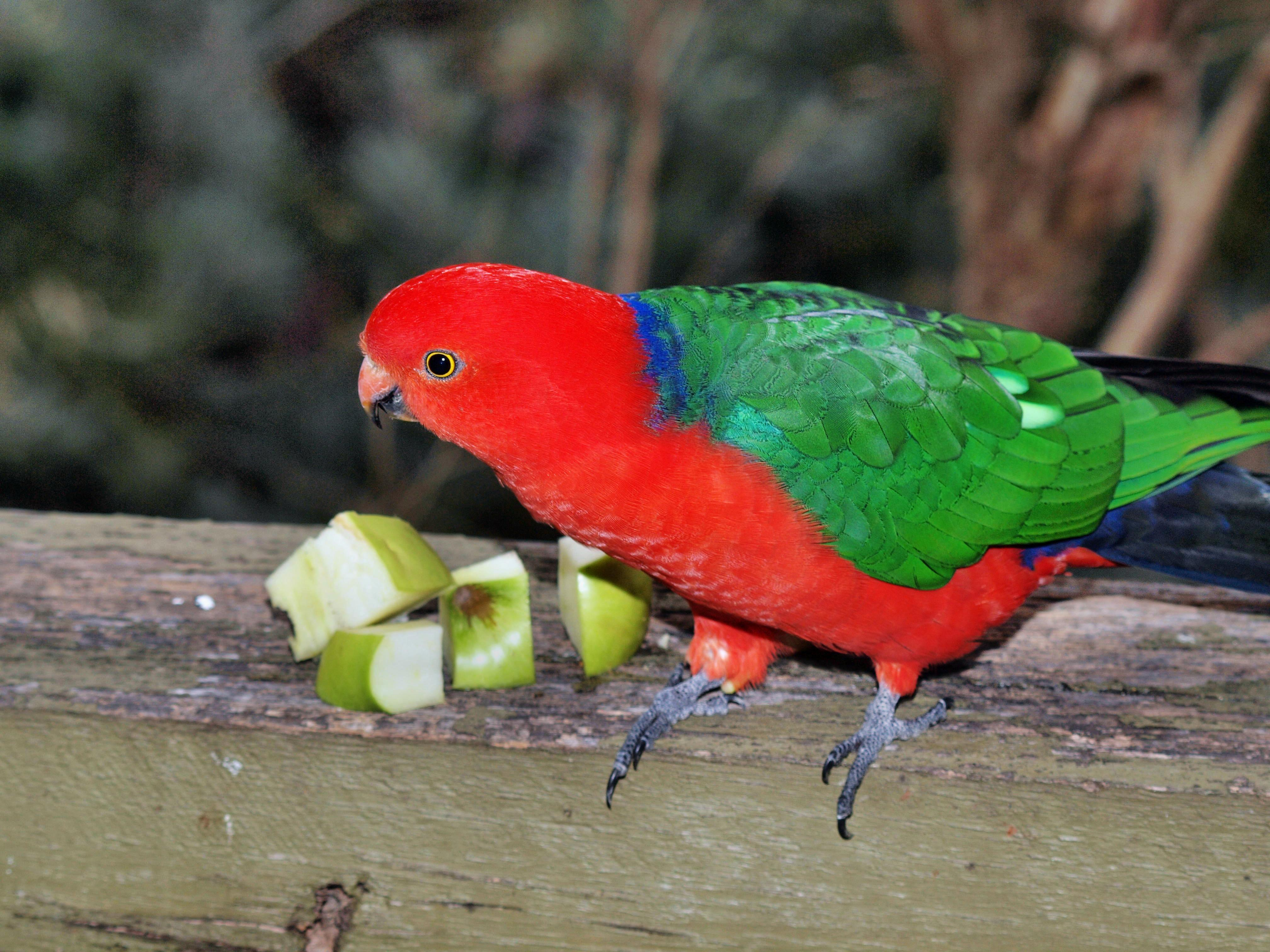 Parrot-12.jpeg