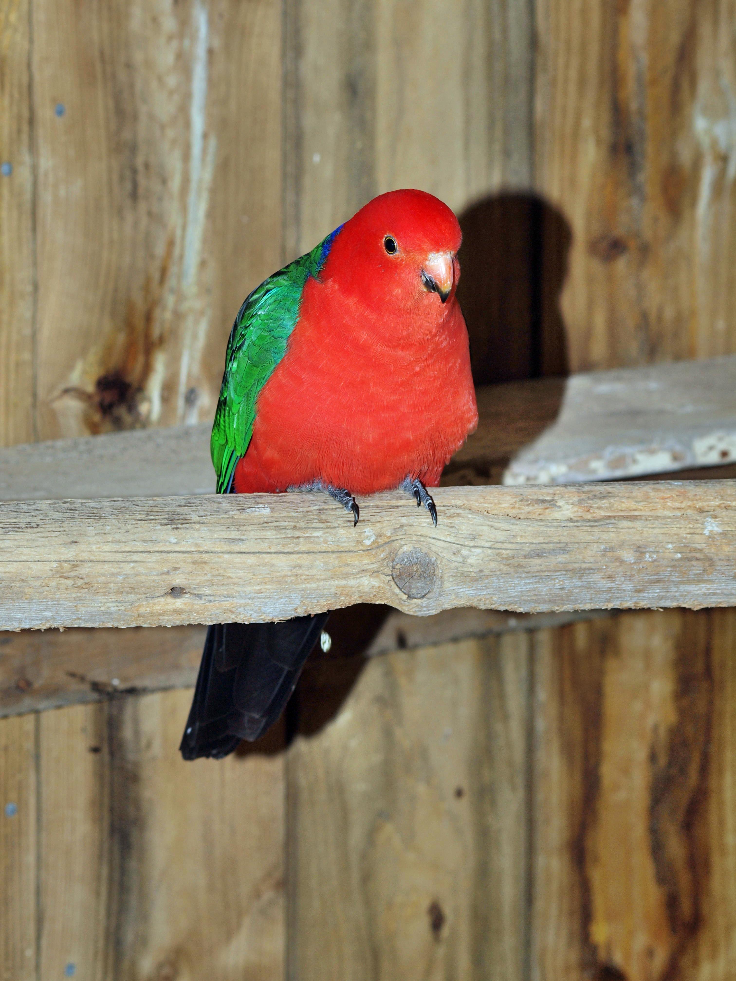 Parrot-14.jpeg