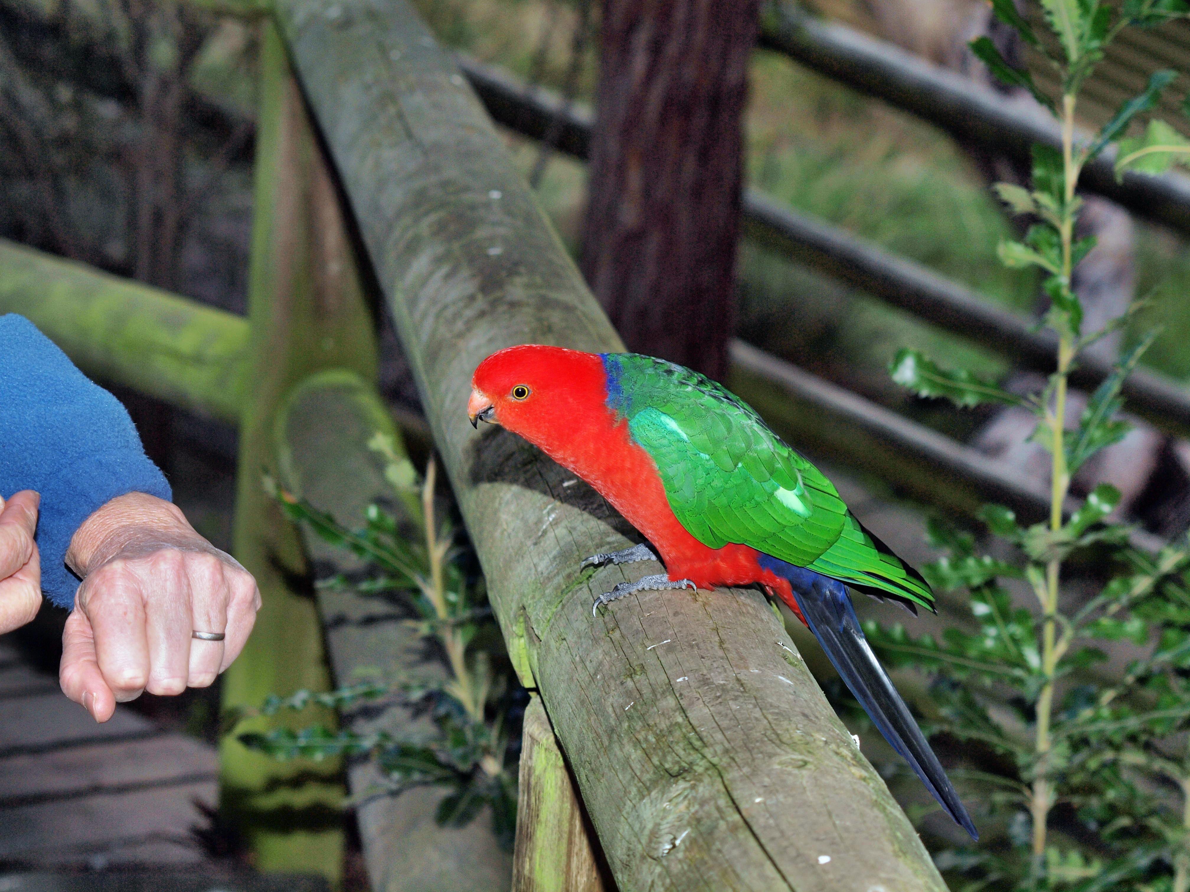 Parrot-16.jpeg